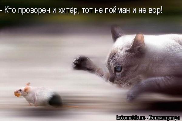 Котоматрица: - Кто проворен и хитёр, тот не пойман и не вор!