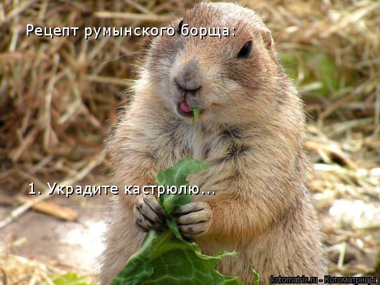 Котоматрица: Рецепт румынского борща: 1. Украдите кастрюлю...