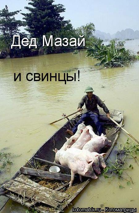 Котоматрица: Дед Мазай и свинцы!