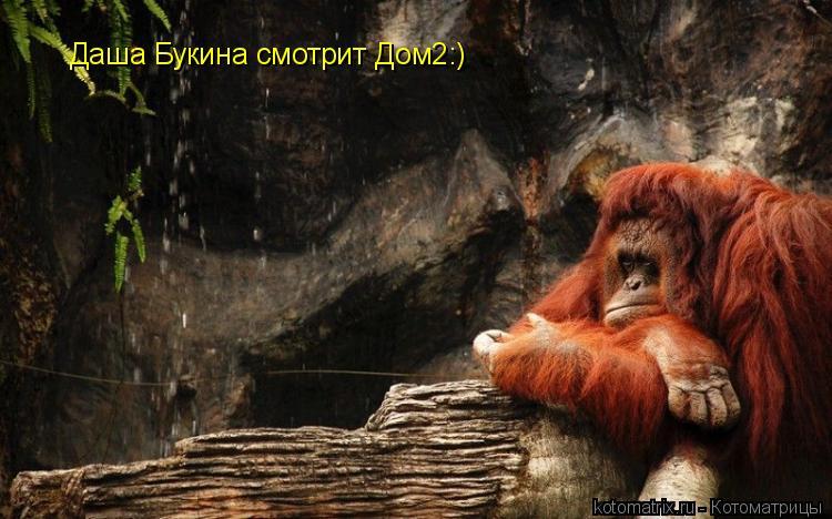 Котоматрица: Даша Букина смотрит Дом2:)