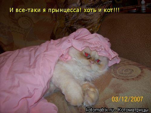Котоматрица: И все-таки я прынцесса! хоть и кот!!!