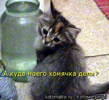 Котоматрица: А куда моего хомячка дели?