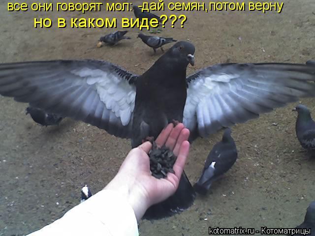Котоматрица: все они говорят мол: -дай семян,потом верну но в каком виде???