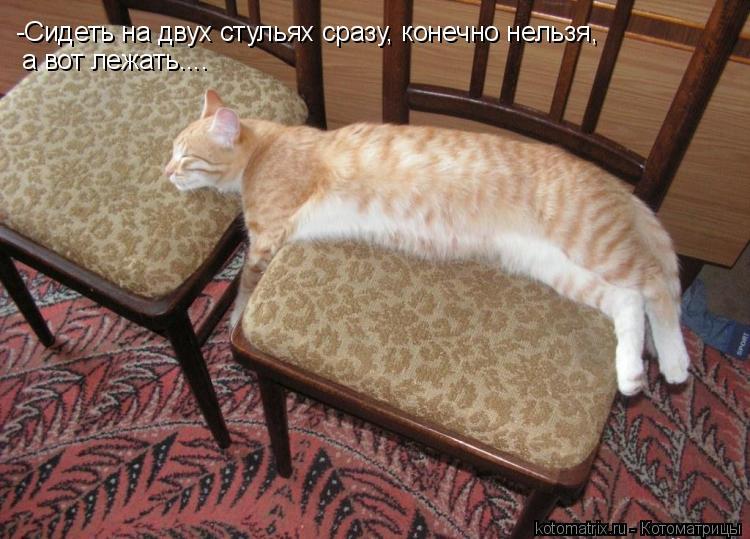Котоматрица: -Сидеть на двух стульях сразу, конечно нельзя, а вот лежать....