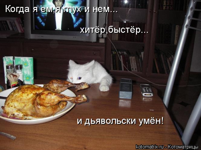 Котоматрица: Когда я ем,я глух и нем... хитёр,быстёр... и дьявольски умён!