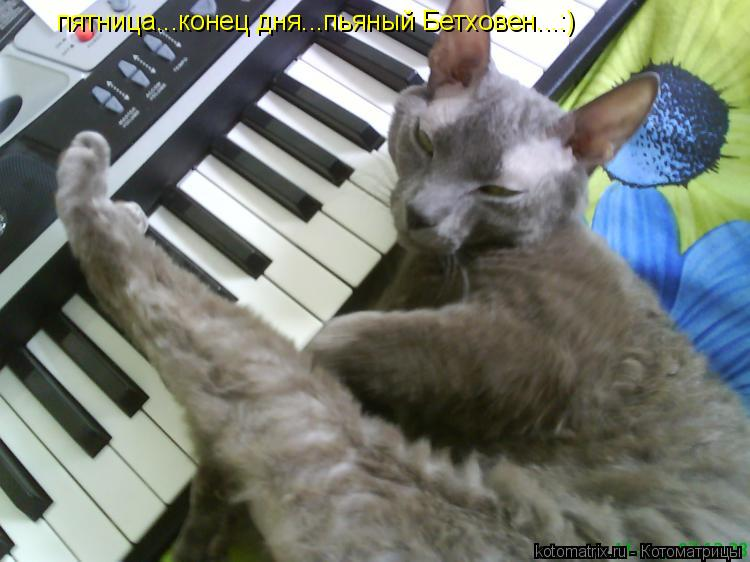 Котоматрица: пятница...конец дня...пьяный Бетховен...:)
