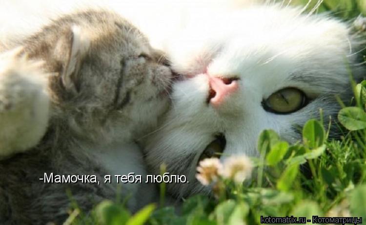 Котоматрица: -Мамочка, я тебя люблю.