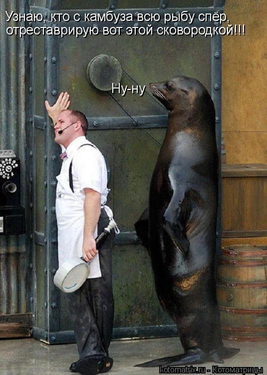 Котоматрица: Ну-ну Узнаю, кто с камбуза всю рыбу спёр, отреставрирую вот этой сковородкой!!!