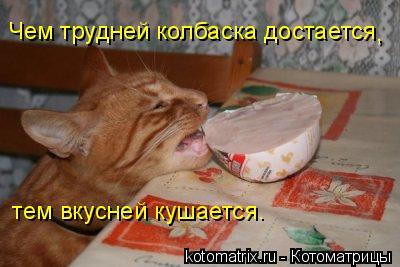Котоматрица: Чем трудней колбаска достается  тем вкусней кушается.  ,