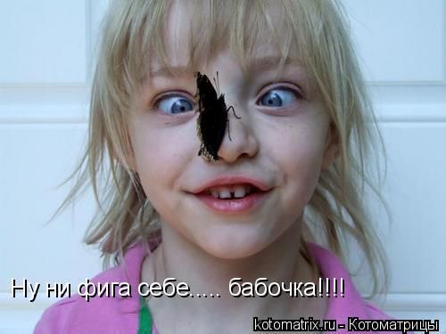 Котоматрица: Ну ни фига себе..... бабочка!!!!