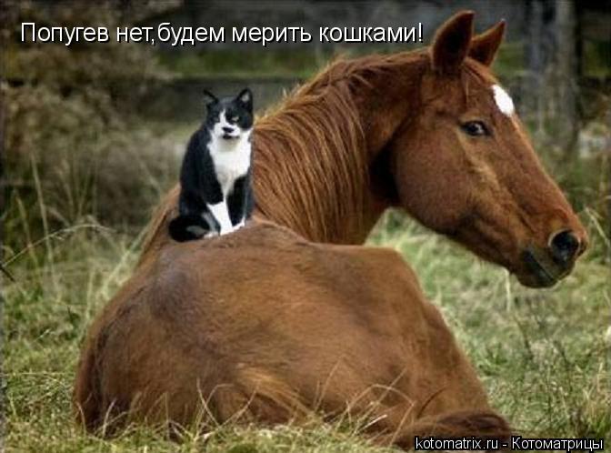 Котоматрица: Попугев нет,будем мерить кошками!