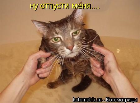 Котоматрица: ну отпусти меня....