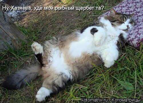 Котоматрица: Ну, Хазяева, хде мой рыбный щербет та?