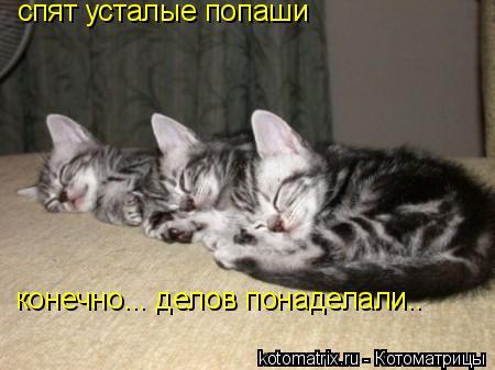 Котоматрица: спят усталые попаши конечно... делов понаделали..