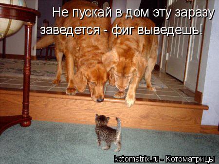 Котоматрица: Не пускай в дом эту заразу заведется - фиг выведешь!