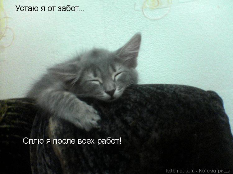 Котоматрица: Устаю я от забот.... Сплю я после всех работ!