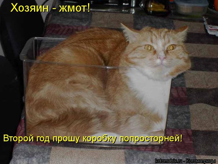Котоматрица: Хозяин - жмот!  Второй год прошу коробку попросторней!