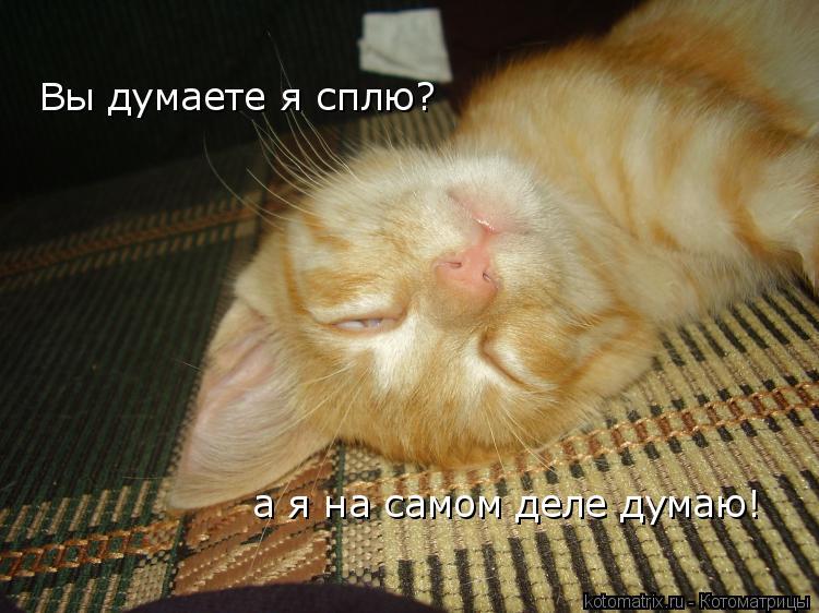 Котоматрица: Вы думаете я сплю? а я на самом деле думаю!