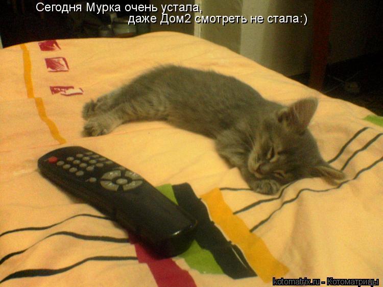 Котоматрица: Сегодня Мурка очень устала, даже Дом2 смотреть не стала:)
