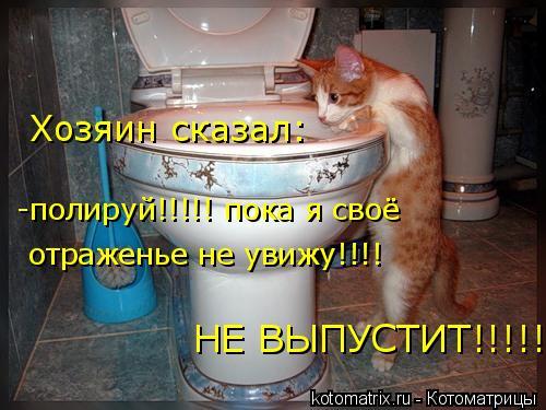 Котоматрица: отраженье не увижу!!!! -полируй!!!!! пока я своё  Хозяин сказал: НЕ ВЫПУСТИТ!!!!!