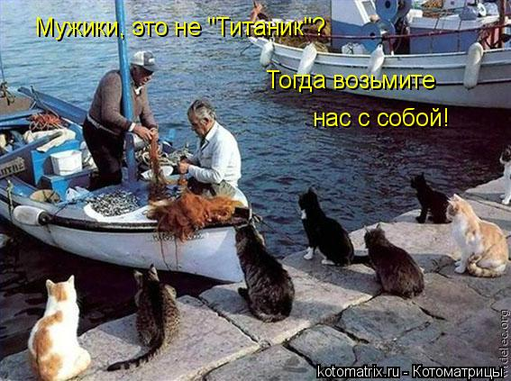 """Котоматрица: Мужики, это не """"Титаник""""? Тогда возьмите  нас с собой!"""