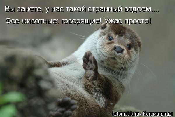 Котоматрица: Вы занете, у нас такой странный водоем.... Фсе животные: говорящие! Ужас просто!