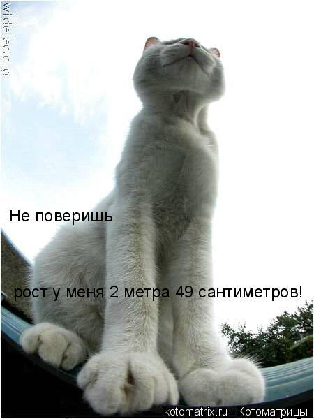 Котоматрица: Не поверишь рост у меня 2 метра 49 сантиметров!