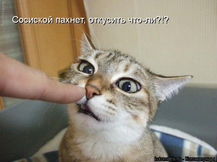 Котоматрица: Сосиской пахнет, откусить что-ли?!?