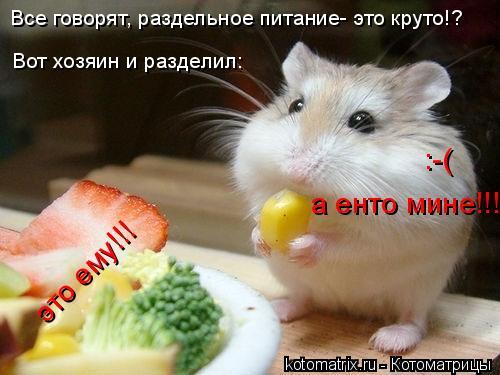 Котоматрица: Все говорят, раздельное питание- это круто!? Вот хозяин и разделил:  это ему!!!  а енто мине!!! :-(