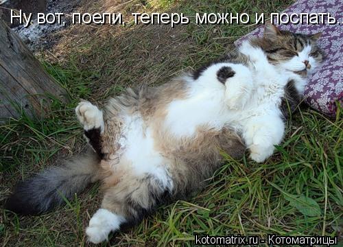 Котоматрица: Ну вот, поели, теперь можно и поспать...