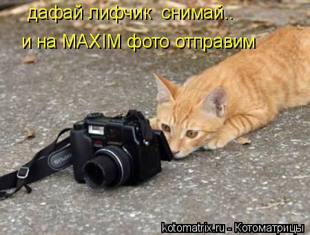 Котоматрица: дафай лифчик  снимай..  и на MAXIM фото отправим