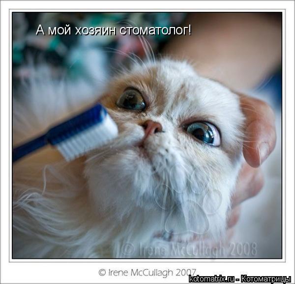 Котоматрица: А мой хозяин стоматолог!