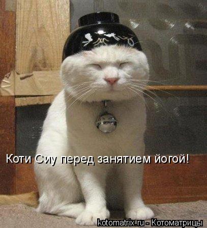 Котоматрица: Коти Сиу перед занятием йогой!