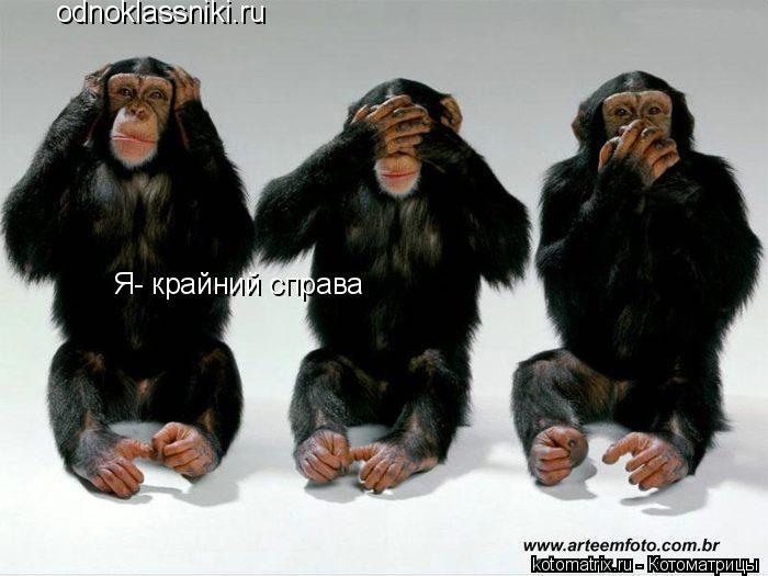 Котоматрица: odnoklassniki.ru Я- крайний справа