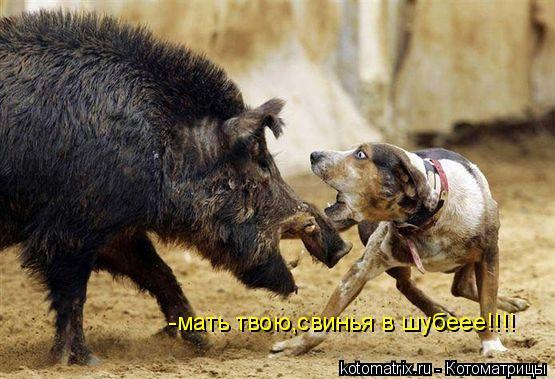 Котоматрица: -мать твою,свинья в шубеее!!!!