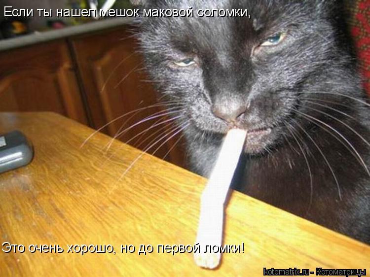 Котоматрица: Если ты нашел мешок маковой соломки,  Это очень хорошо, но до первой ломки!