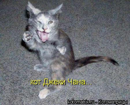 Котоматрица: кот Джеки Чана...
