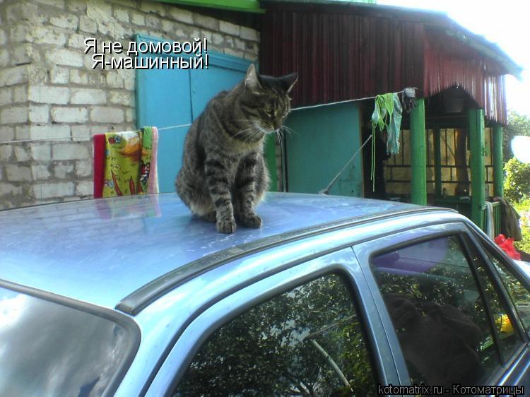 Котоматрица: Я не домовой! Я-машинный!