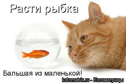 Котоматрица: Расти рыбка Бальшая из маленькой!