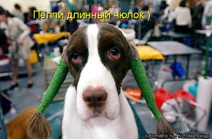 Котоматрица: Пеппи длинный чюлок:)