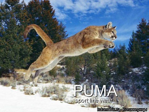 Котоматрица: PUMA sport line wear