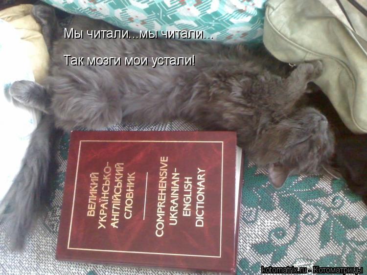 Котоматрица: Мы читали...мы читали... Так мозги мои устали!
