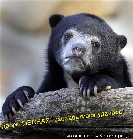 """Котоматрица: да уж,""""ЛЕСНАЯ"""" карпаративка удалась!"""