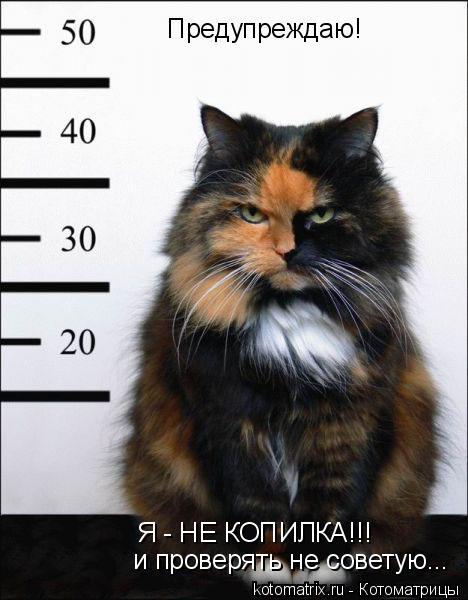 Котоматрица: Предупреждаю! Я - НЕ КОПИЛКА!!! и проверять не советую...