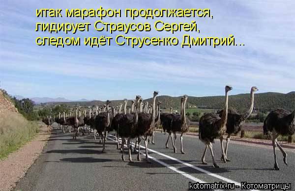 Котоматрица: итак марафон продолжается, лидирует Страусов Сергей, следом идёт Струсенко Дмитрий...