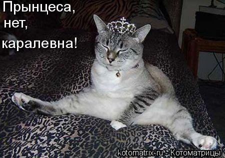 Котоматрица: Прынцеса,  нет,  каралевна!