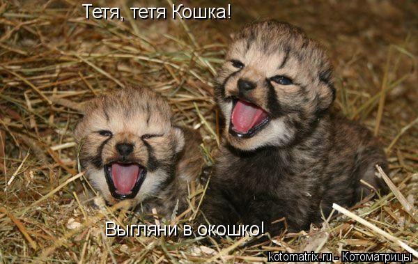 Котоматрица: Тетя, тетя Кошка! Выгляни в окошко!