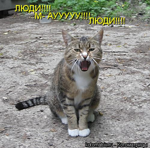 Котоматрица: ЛЮДИ!!!! М- АУУУУУ!!!! ЛЮДИ!!!!