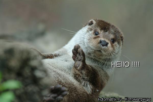 Котоматрица: HEIIO !!!!