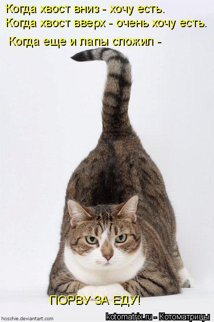 Котоматрица: Когда хвост вниз - хочу есть. Когда хвост вверх - очень хочу есть. Когда еще и лапы сложил -  ПОРВУ ЗА ЕДУ!